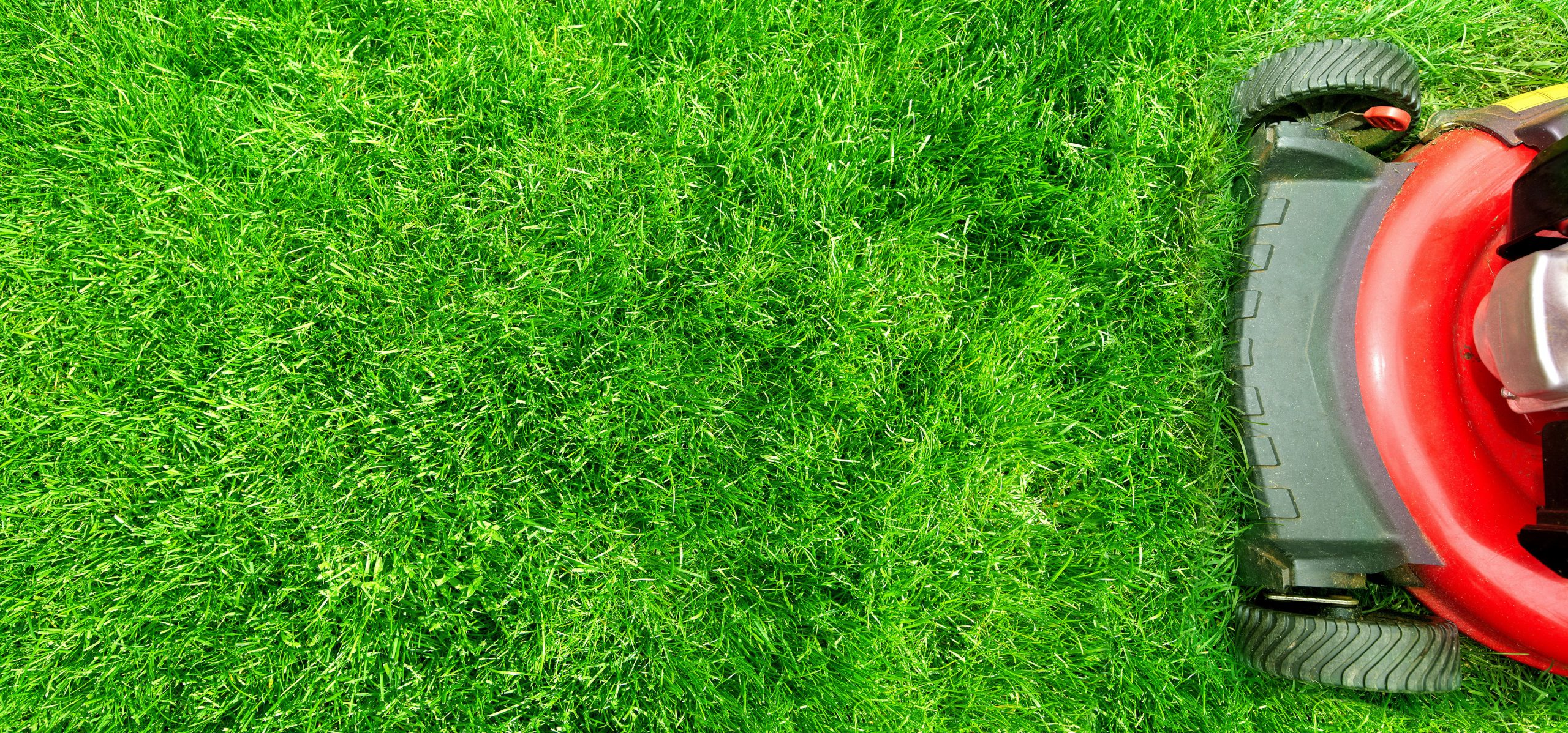 Lawn Mowing Pagewood